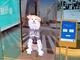 """渋谷に""""デジタルハチ公""""出現、周辺はWi-Fi無料 「新たな待ち合わせ場所に」"""
