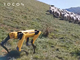 Boston Dynamicsの犬型ロボット「Spot」が牧羊犬に?