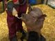 イーロン・マスクのNeuralink、脳埋め込みチップのブタでのデモで進捗報告