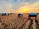"""Alphabetの次のムーンショットは""""農業"""" 畑ロボットでデータ収集中"""