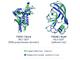 Google系列のDeepMind、AIシステム「AlphaFold」で「タンパク質折りたたみ問題」で大飛躍 新薬開発への重要な一歩
