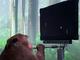 Neuralink、脳にチップを埋めたサルが「Pong」を思念でプレイする動画を公開