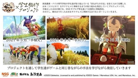 田植え サクナヒメ 【サクナヒメ】田植えのコツ 時期と密度