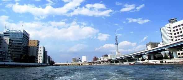 ky_kawasemi_0629_01.jpg