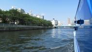 ky_kawasemi_0629_14.jpg