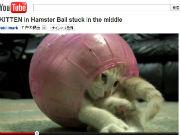 ah_cat2.jpg