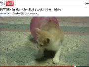 ah_cat3.jpg