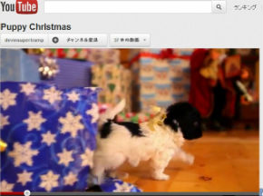 ah_puppy1.jpg