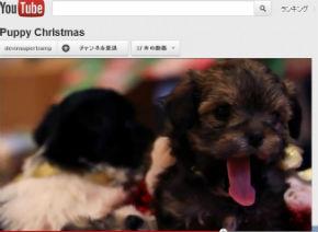 ah_puppy3.jpg