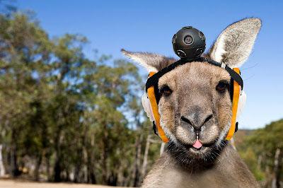 ah_Kangaroo.jpg