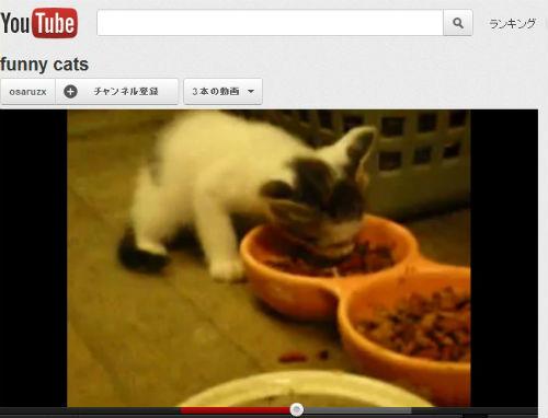 ah_catvideo1.jpg