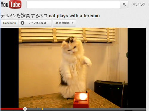 ah_catvideo2.jpg