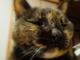 「なまりぶしがあれば生きていける」——ネコにインタビューしたっていいじゃない