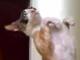 な、なんだそのポーズは! 悟りの姿勢でバランスを取る猫ちゃん【動画あり】