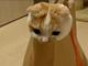 ねこらぼ:袋からズボッ! マックの袋が大好きな猫ちゃん動画