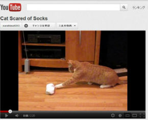 ah_catsocks1.jpg