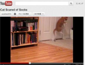 ah_catsocks2.jpg