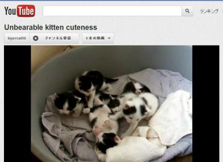 ah_kitten.jpg