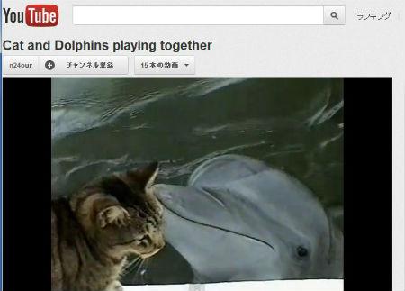 ah_dolphin.jpg