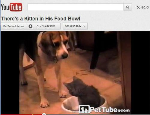 ah_cat_food.jpg
