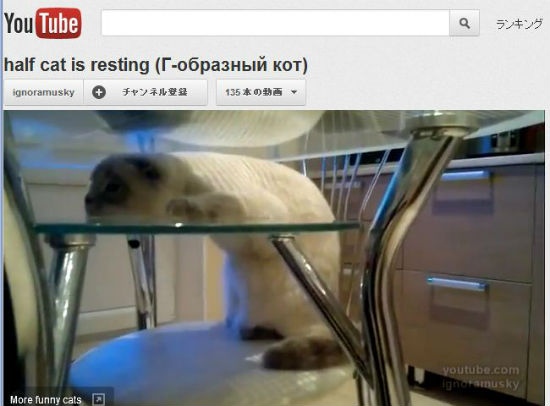 ah_cat_rest.jpg