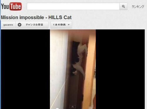 ah_cat_ver1.jpg