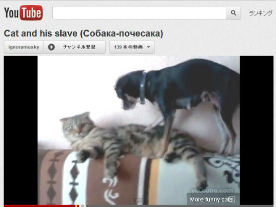 ah_cat_dog.jpg
