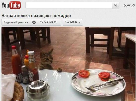 ah_cat_tomato.jpg
