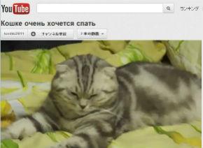 ah_cat_10sec1.jpg