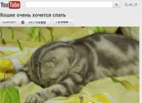 ah_cat_10sec2.jpg