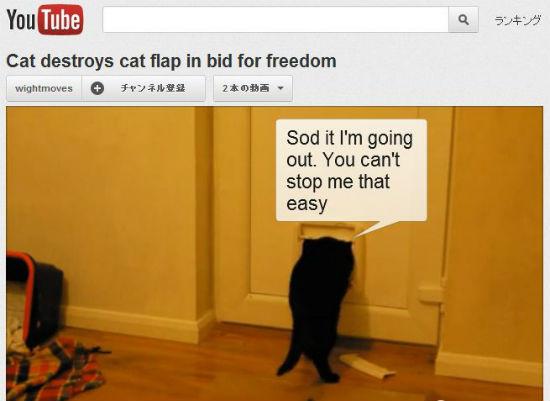 ah_cat_door.jpg