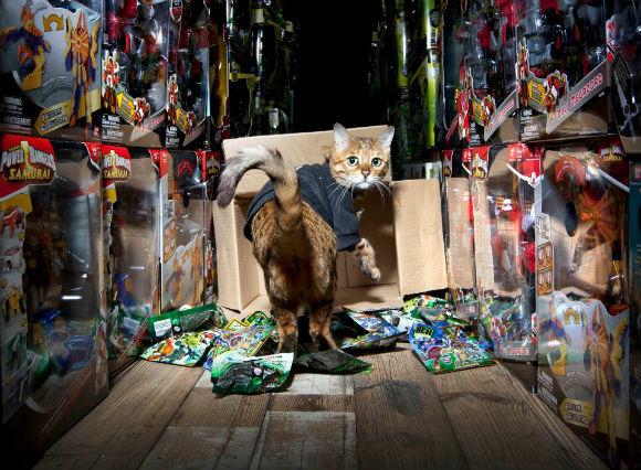 ah_cat_bandai2.jpg