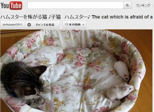 ah_cat_ham.jpg
