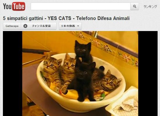 ah_cat_nabe.jpg