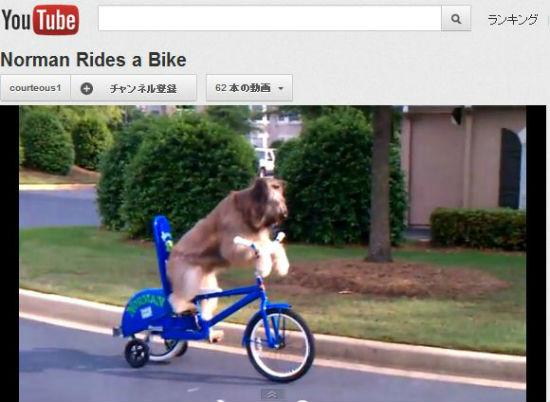 ah_dog.jpg