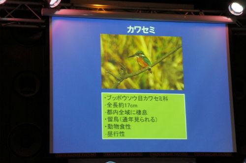 ah_yasei03.jpg