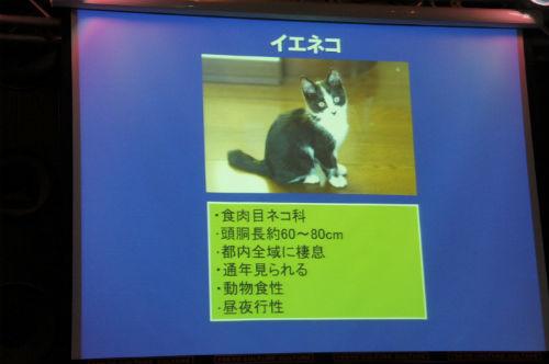 ah_yasei05.jpg