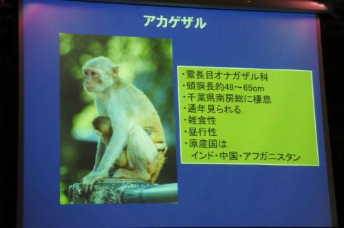 ah_yasei10.jpg