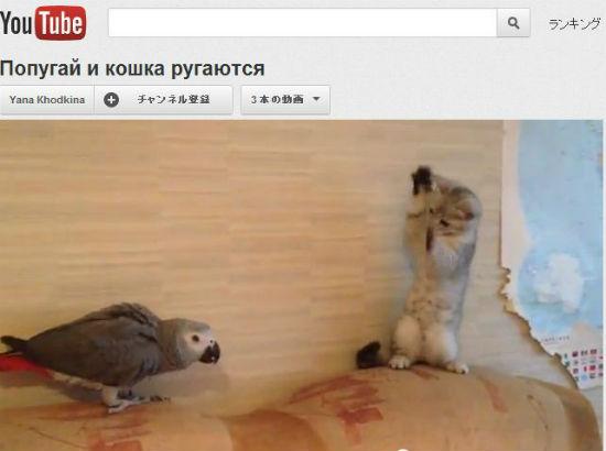 ah_parrot.jpg