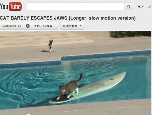 ah_cat_surf.jpg
