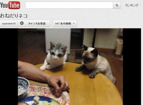 ah_cat_onedari.jpg