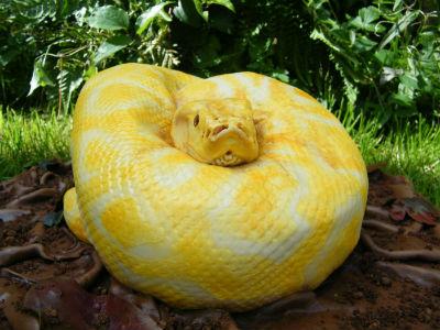 ah_snake2.jpg