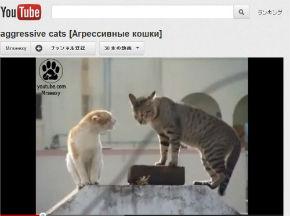ah_cat_kenka.jpg