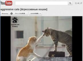 ah_cat_kenka2.jpg