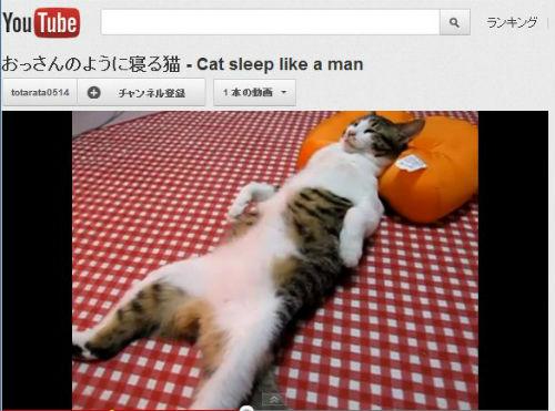 ah_cat_ossan.jpg