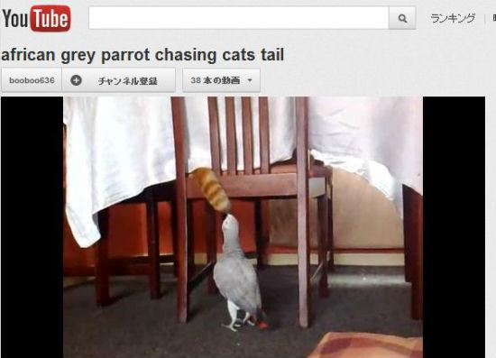 ah_cat_tail.jpg