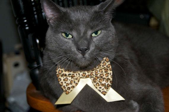 ah_cat_diet2.jpg