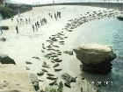 ah_beach11.jpg
