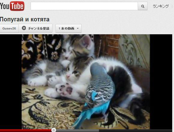 ah_cat_inko1.jpg