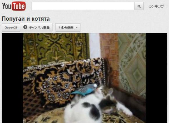 ah_cat_inko2.jpg